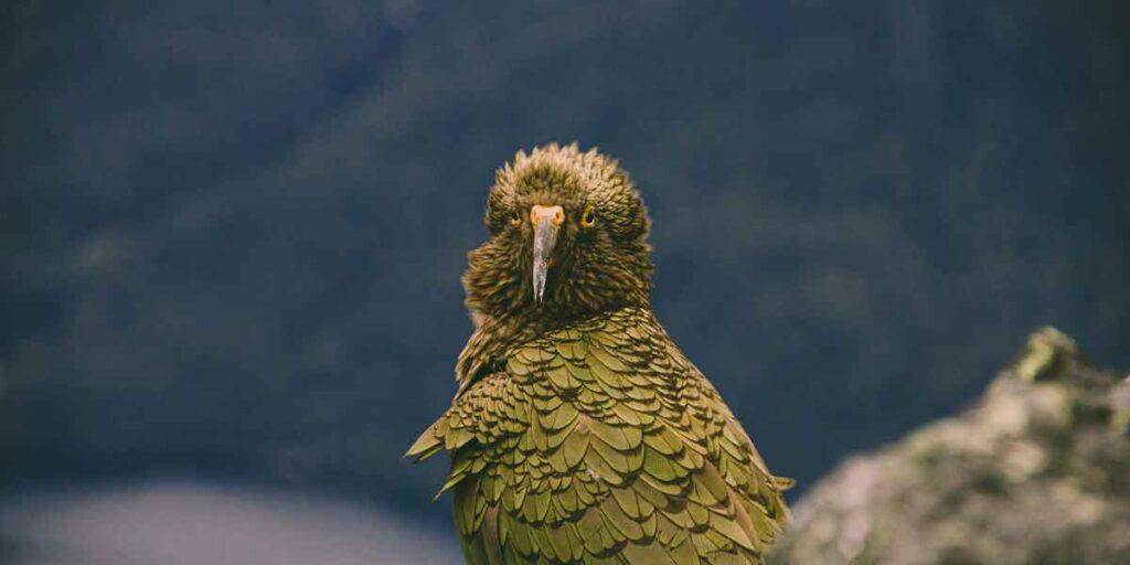 The Top 5 Nature Walks Near Te Anau